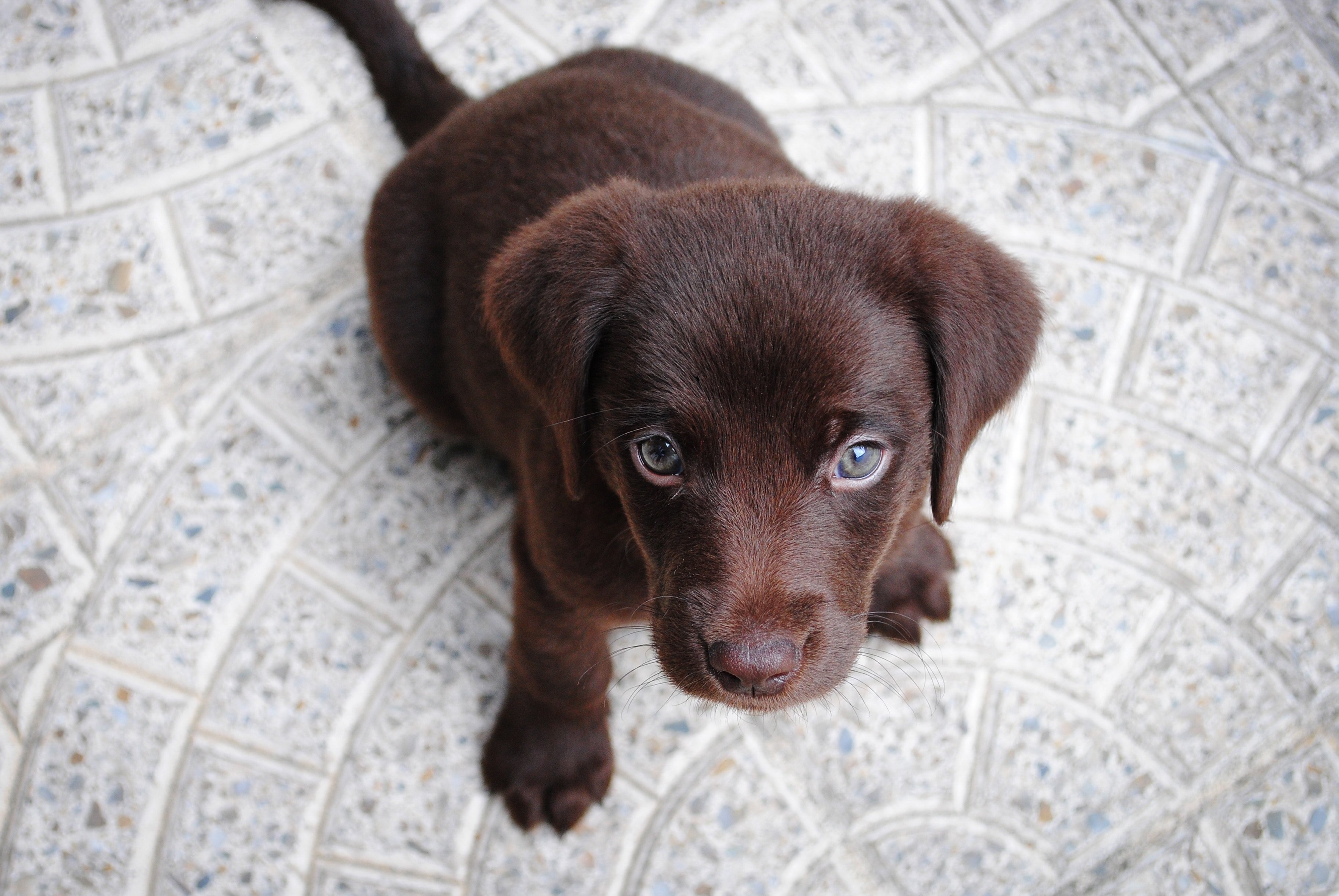 Cute puppy that loves dplyr
