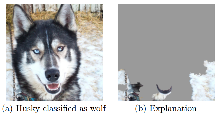A deep learning model that is interpretable and explains why husky and wolves are being mistaken in the learning process
