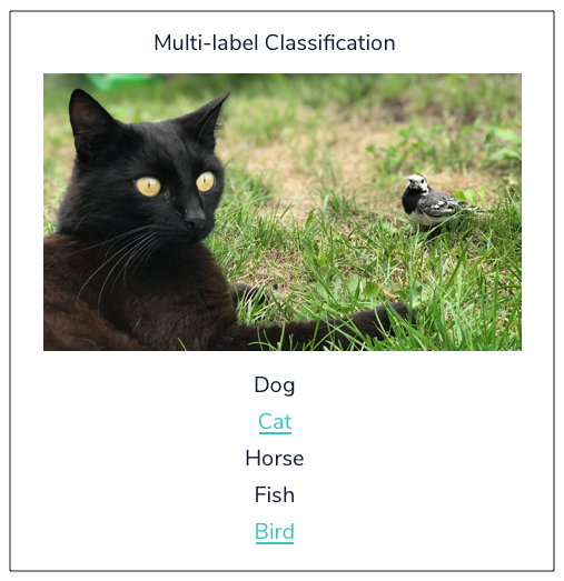 classification model identifying a cat and a bird in an outdoor photo